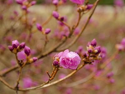 1 Spring flowers